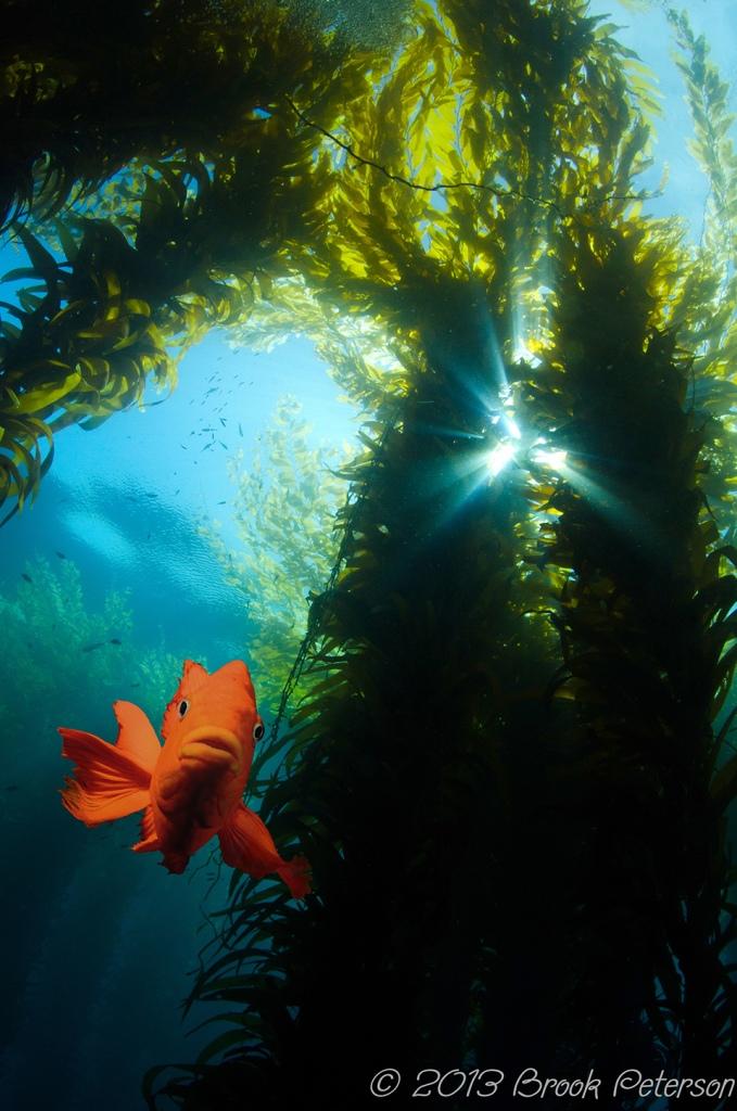 20130824-Kelp and Geribaldi