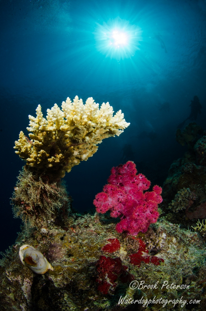 A Hard and a soft coral bask in the sun