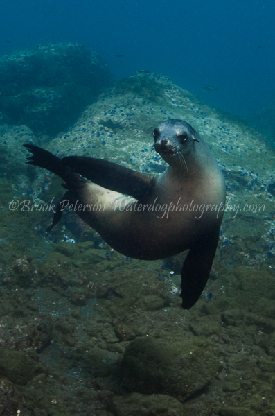 A Sea Lion poses curiously