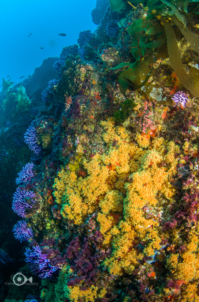 Diving California California Diving Are The